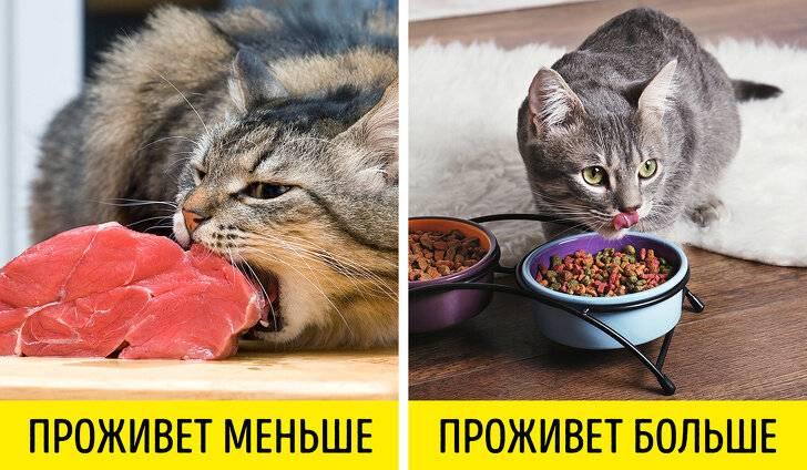 18 правил питомцев, которым как ни крути подчиняется каждый хозяин - gafki.ru