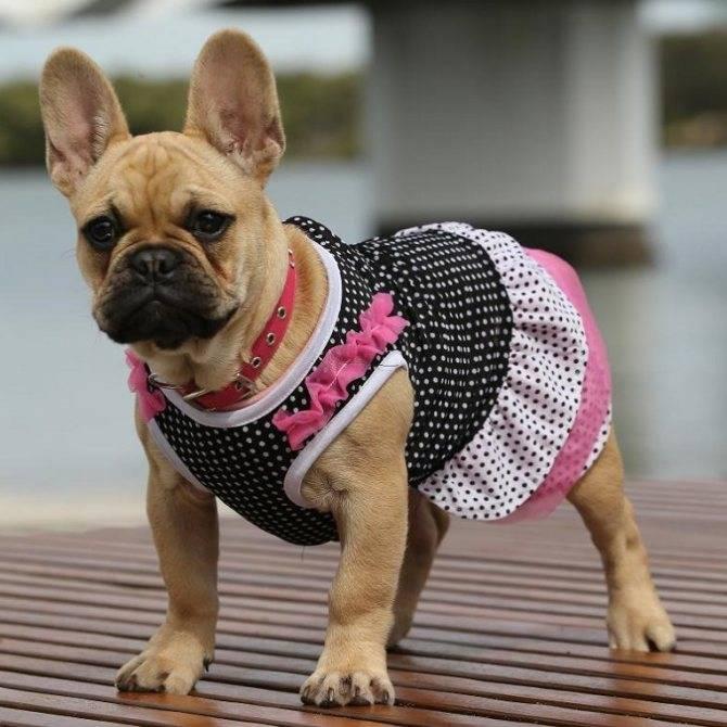 Амуниция для немецкой овчарки - что нужно купить для собаки: ошейник, намордник, шлейка, поводок, намордник и др.