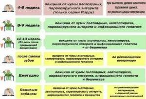 Когда можно начинать гулять с щенком после прививок. как приучать щенка к прогулке. - petstime.ru