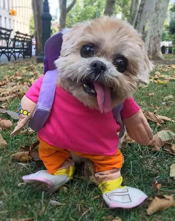 Смешные породы собак в мире с названиями и фото, особенности их содержания