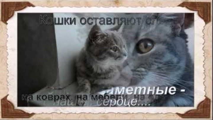 Есть ли у кошек память, и как долго они помнят людей, события, обиды | ваши питомцы | яндекс дзен