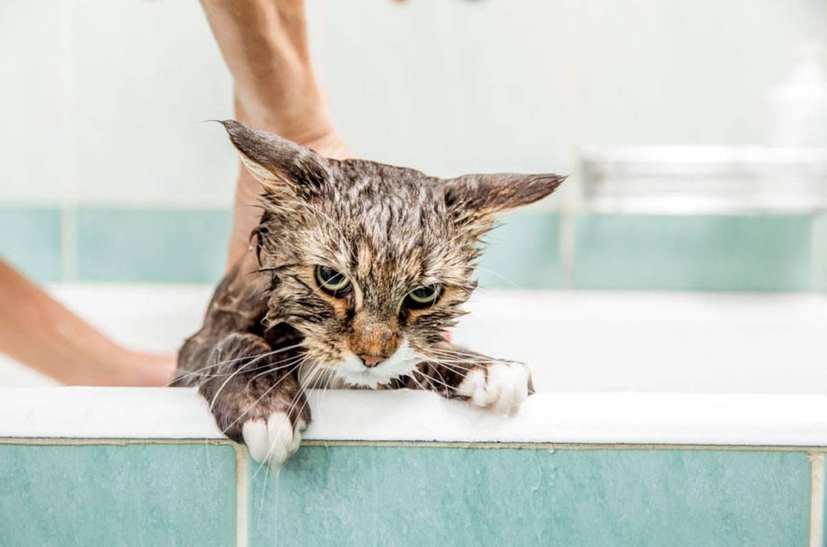 Почему кошки боятся воды и коты которые любят купаться