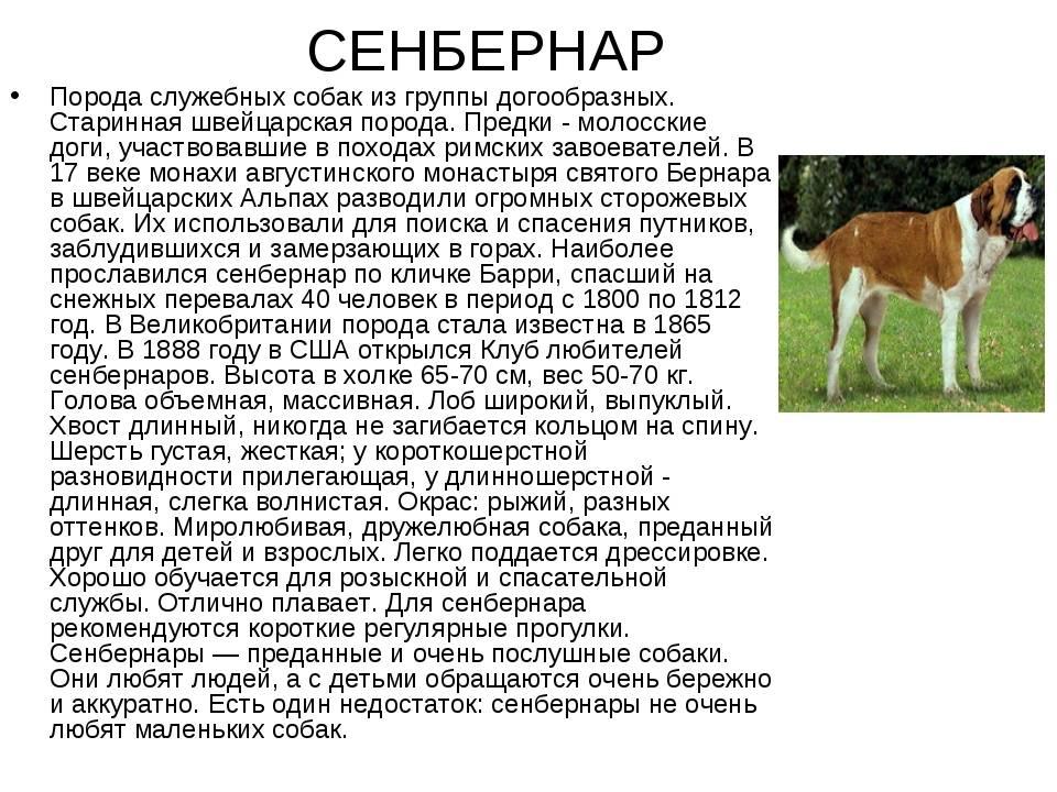 Помесь померанского шпица и сибирского хаски: особенности породы