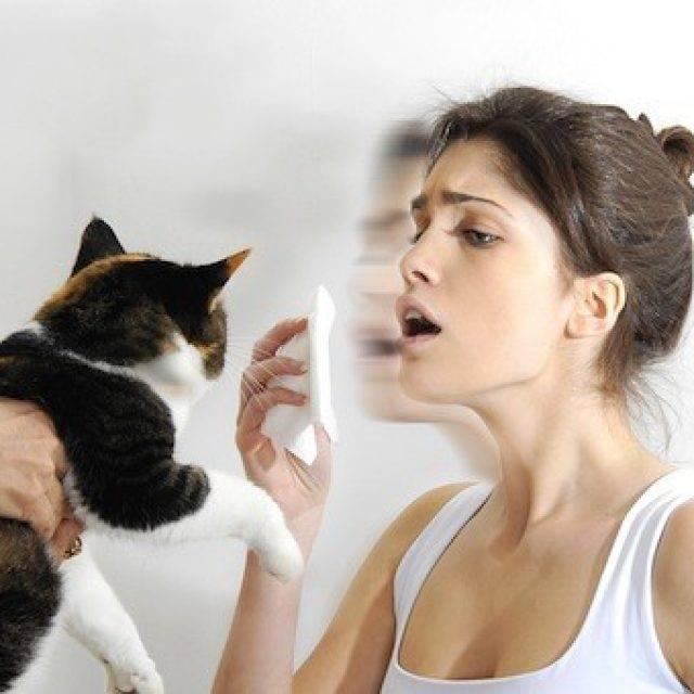 Аллергия у кошек: симптомы и способы лечения - kisa.su