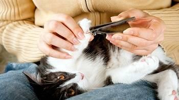 Как подстричь когти кошке: cоветы и рекомендации