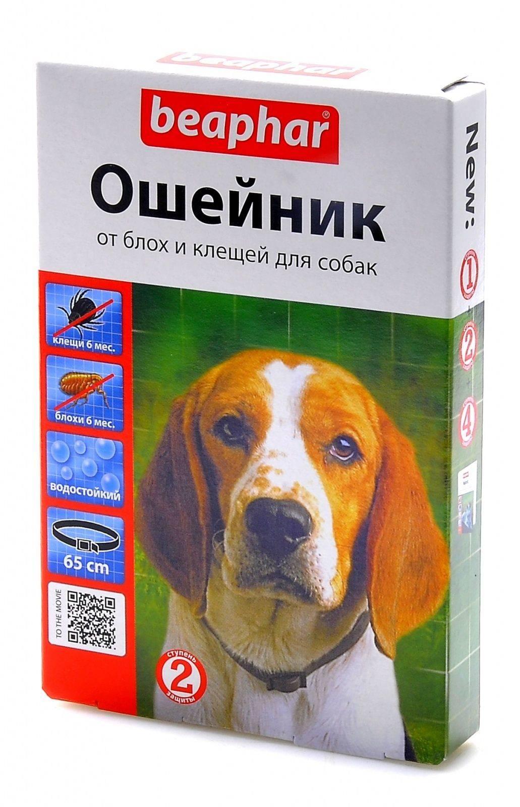 Ошейник от клещей для собак и щенков: использование и меры предосторожности