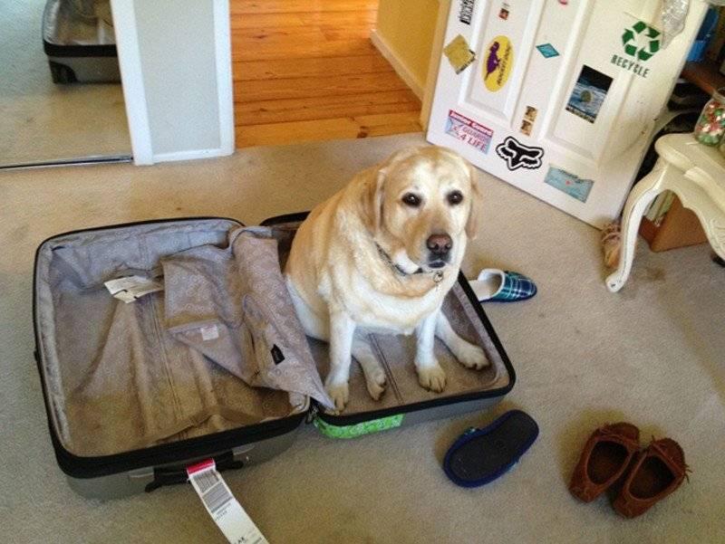 Как оставить кота дома на время отпуска ️