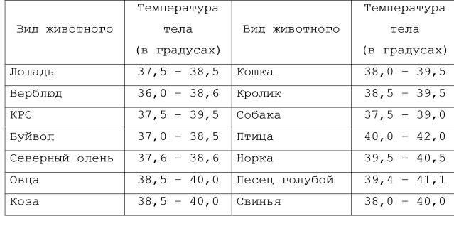 Какая нормальная температура у собаки мелкой и крупной породы?