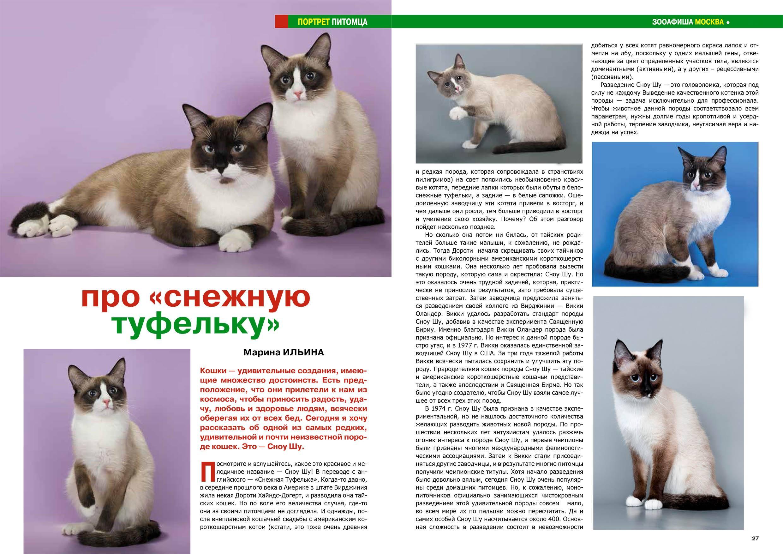 Порода кошек сноу шу: черты характера, особенности ухода | medeponim.ru