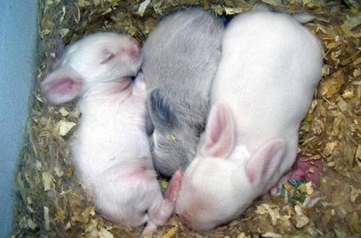 Почему дохнут кролики зимой и летом: причины, что делать