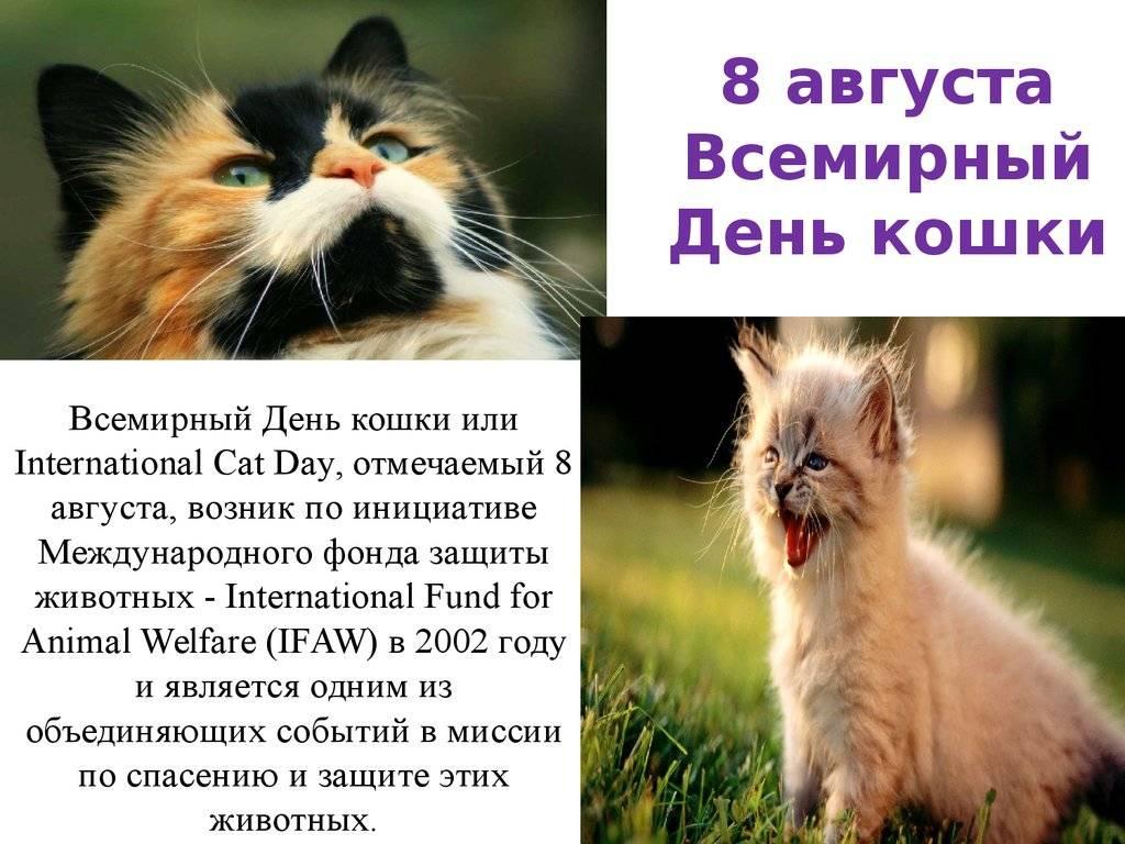 Всемирный день кошек и котов в украине -  8 августа