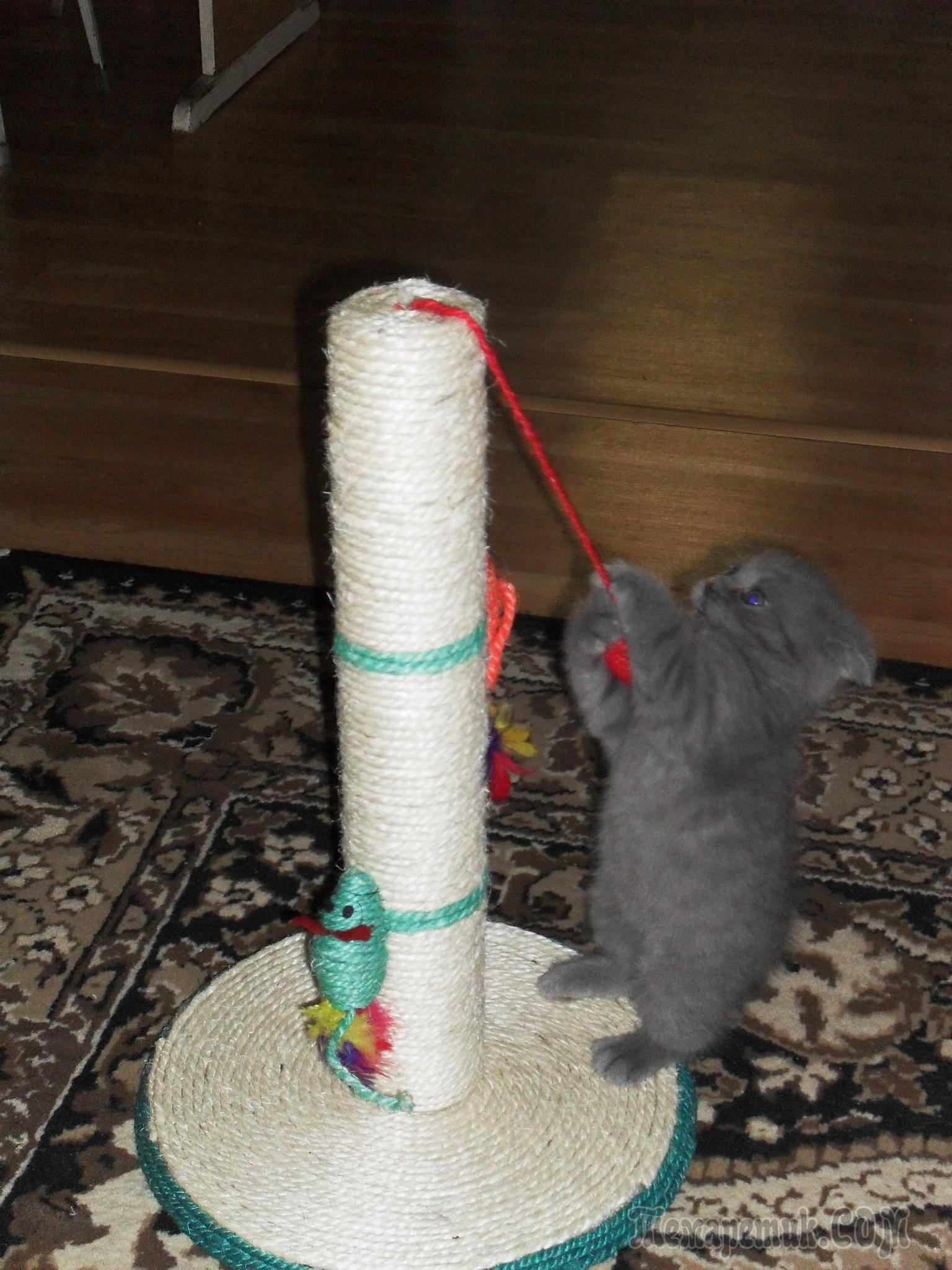 Как сделать когтеточку для кошек своими руками: пошаговая инструкция как сделать когтеточку для кошек своими руками: пошаговая инструкция