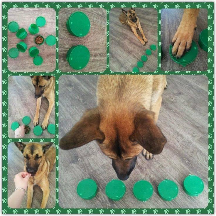 Домик для собаки своими руками в домашних условиях