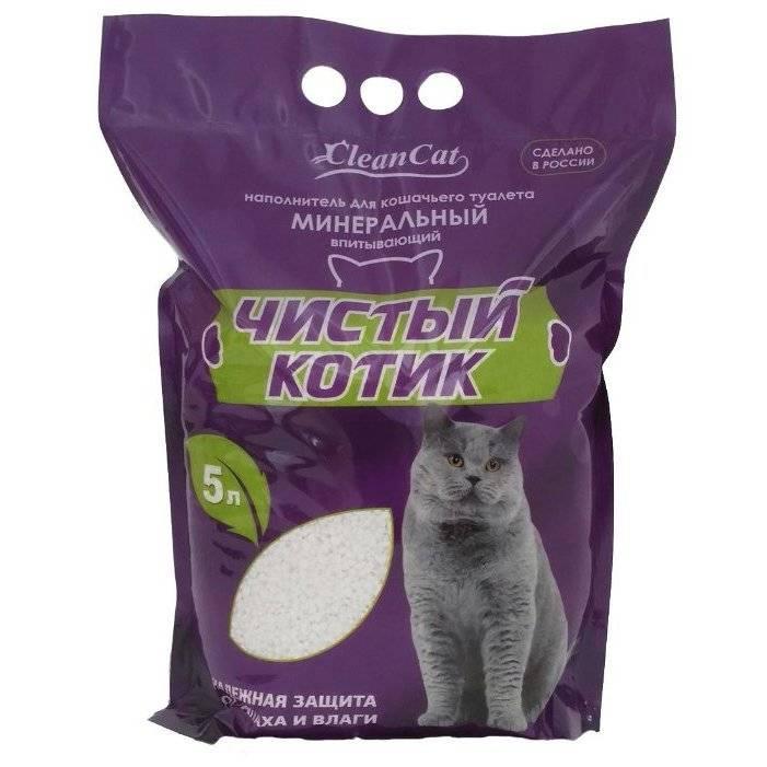 Котята едят наполнитель для туалета