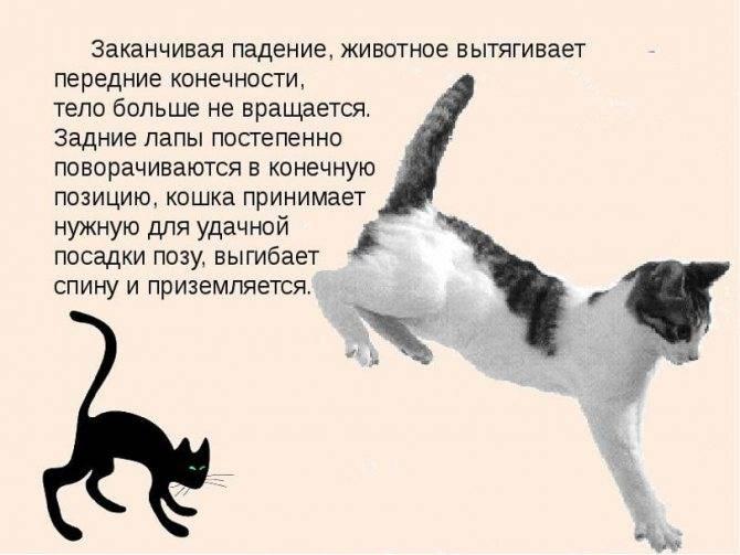 Почему кошки топчут нас лапками? все ли коты топчутся по человеку передними или задними лапами? что делать хозяевам?