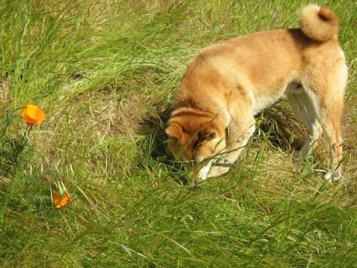 Почему щенок ест свои экскременты: основные причины.