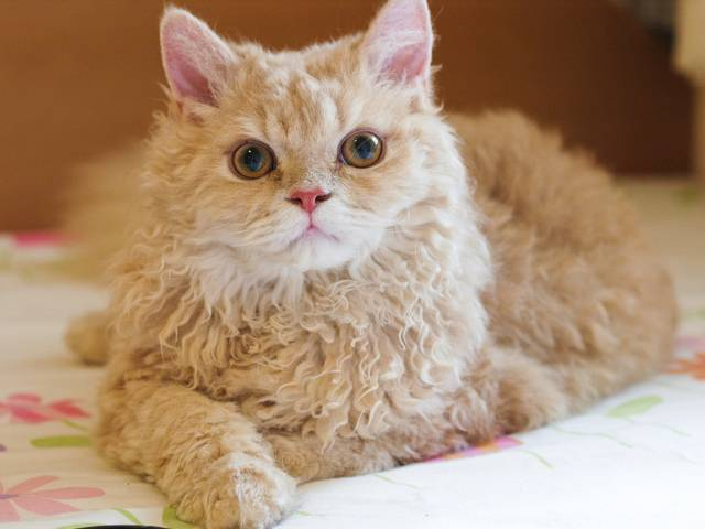 Беспородные кошки: внешний вид, особенности содержания и кормления, отличия дворовых котов