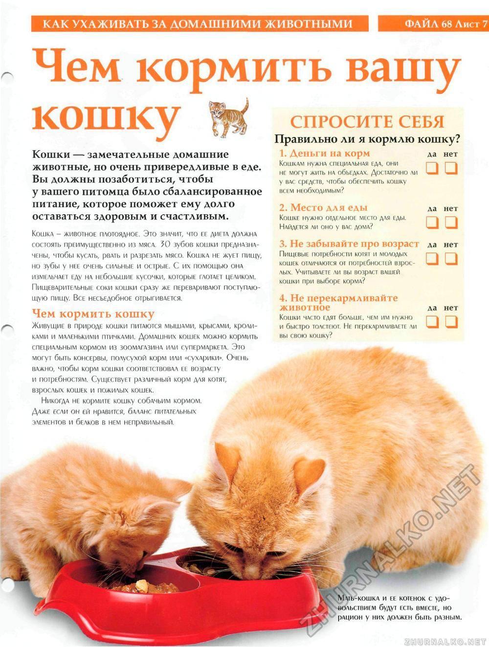 Как кормить котенка?