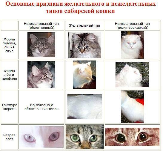 Как правильно определить пол котенка: основные отличия кота от кошки