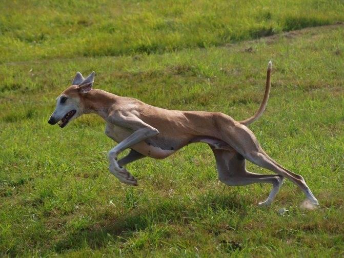 12 самых быстрых животных в мире | new-science.ru