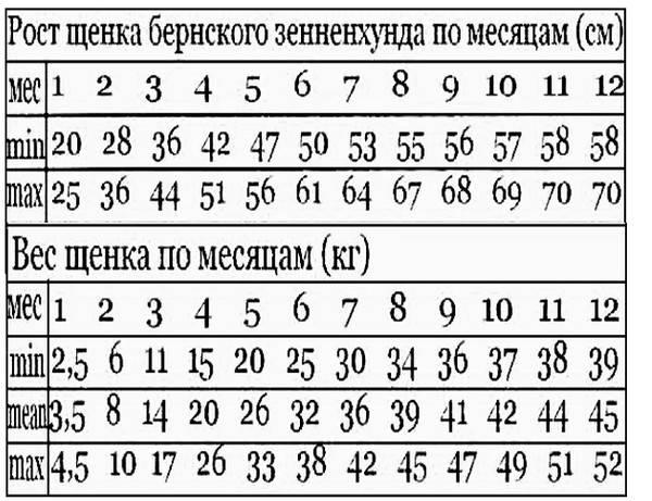 Вес чихуахуа по месяцам: таблица