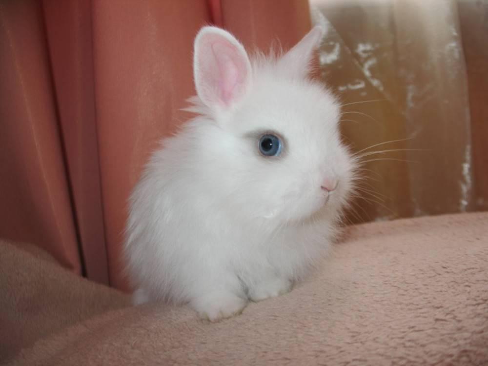 Как лучше назвать любимого кролика