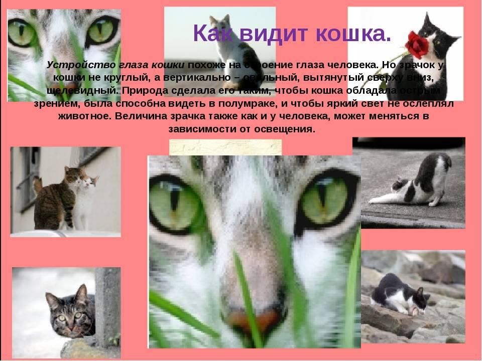 В каком цвете видят кошки окружающий мир? - oozoo.ru