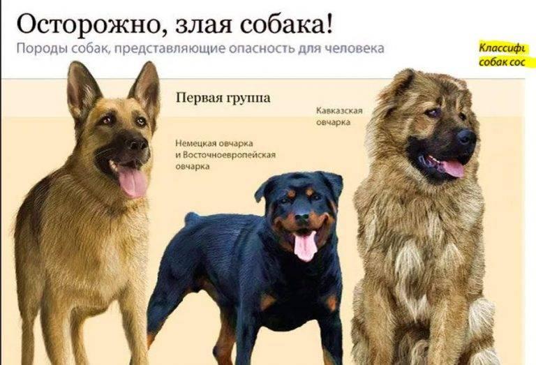 Самые опасные собаки в мире: топ 10 пород
