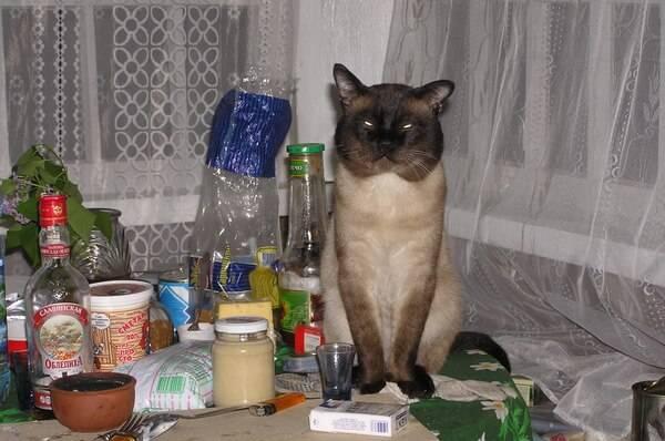 Как отучить кошку лазить по столам, практически методы и советы