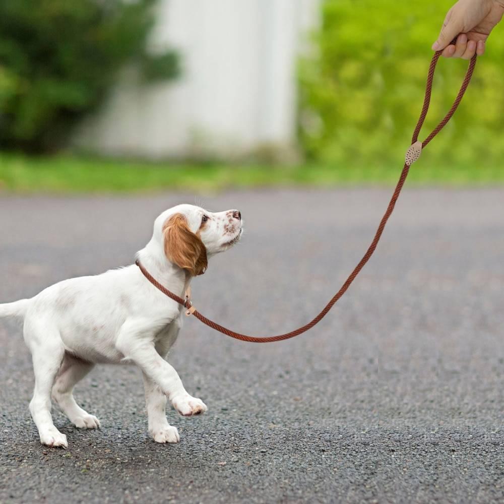 Как правильно пользоваться ошейником удавкой с фиксаторами для собаки