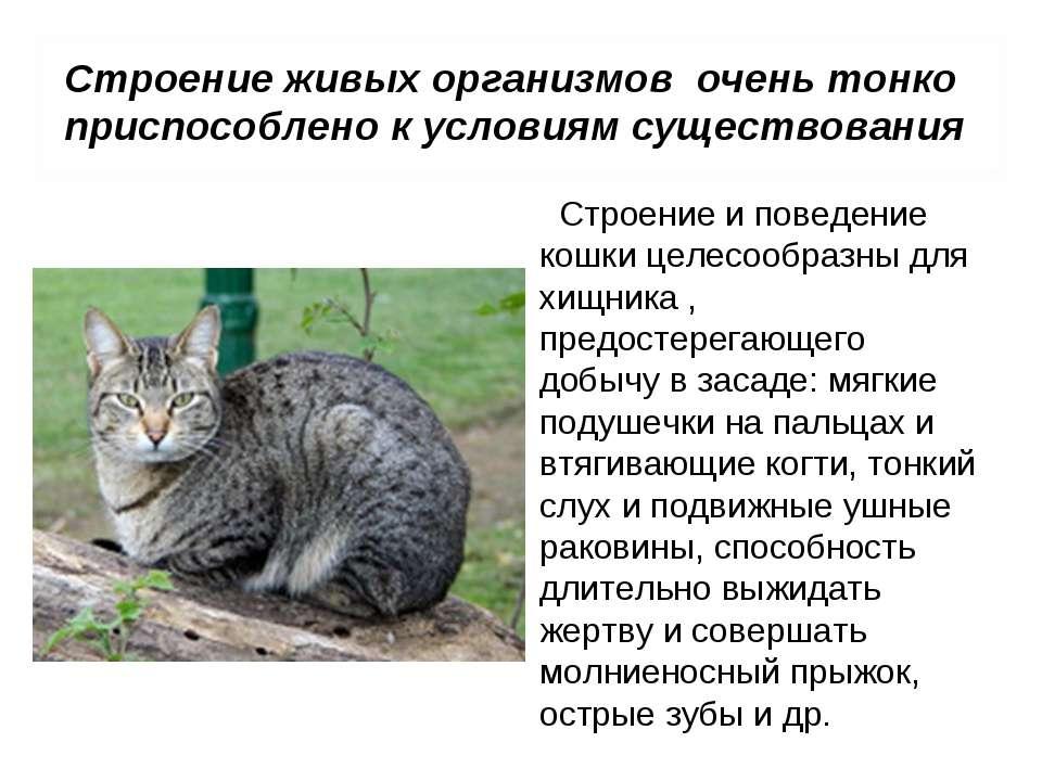 Психология кошек и котов: особенности поведения