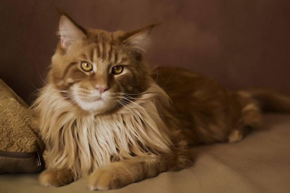 10 пород кошек, которых отличает высокий интеллект