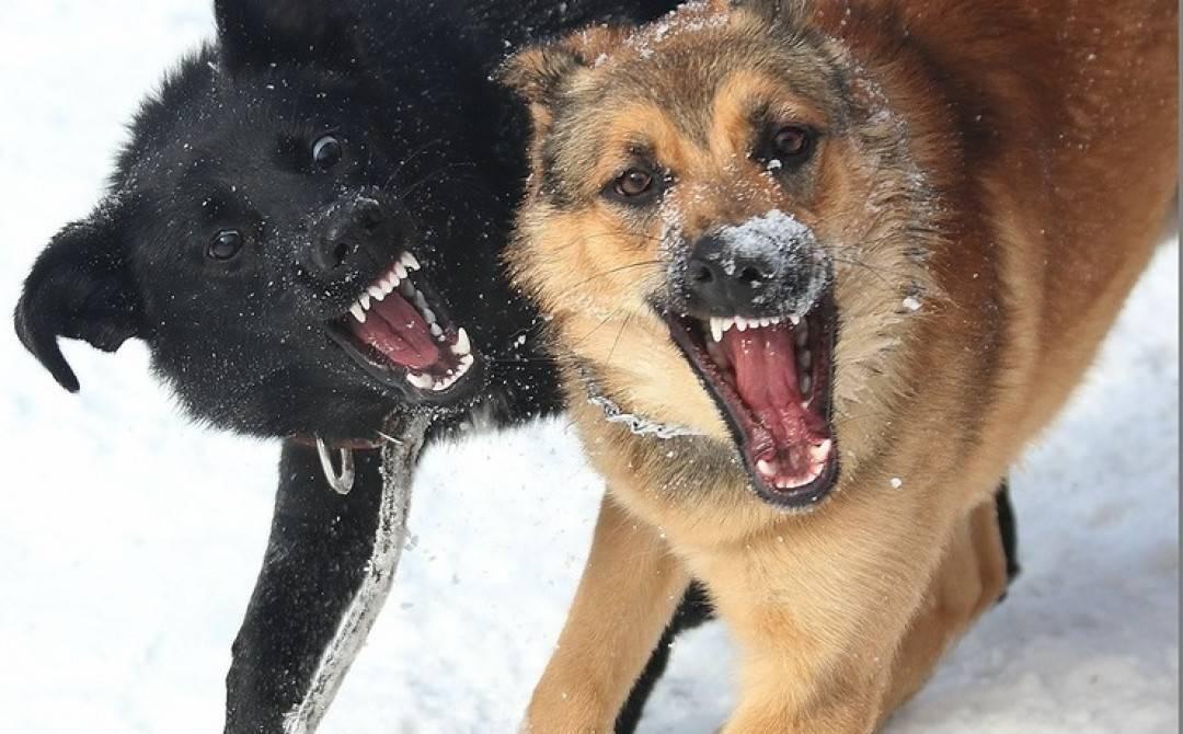 Собака боится хозяина: причины фобии и пути преодоления