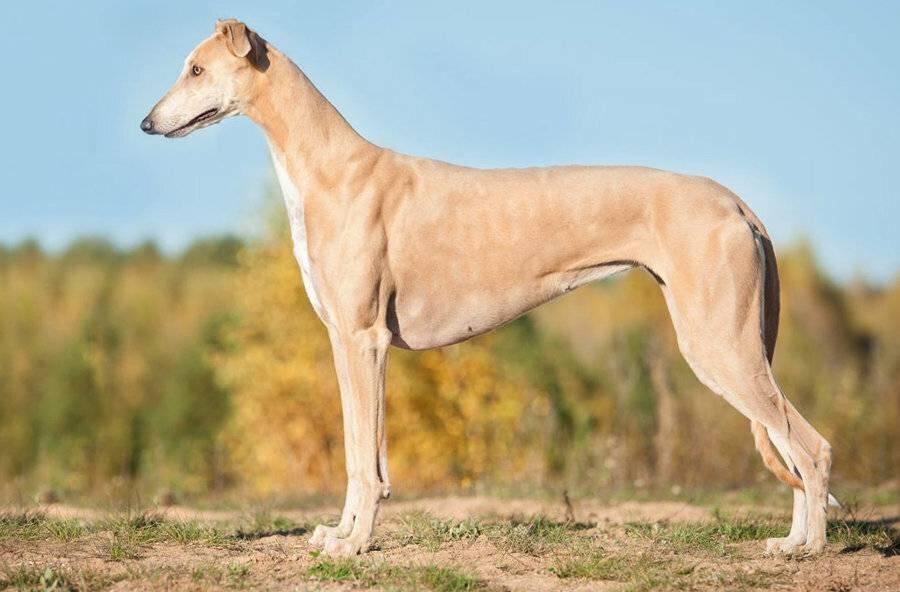 Экспертный рейтинг из 10 самых сильных пород собак в мире от профессионалов