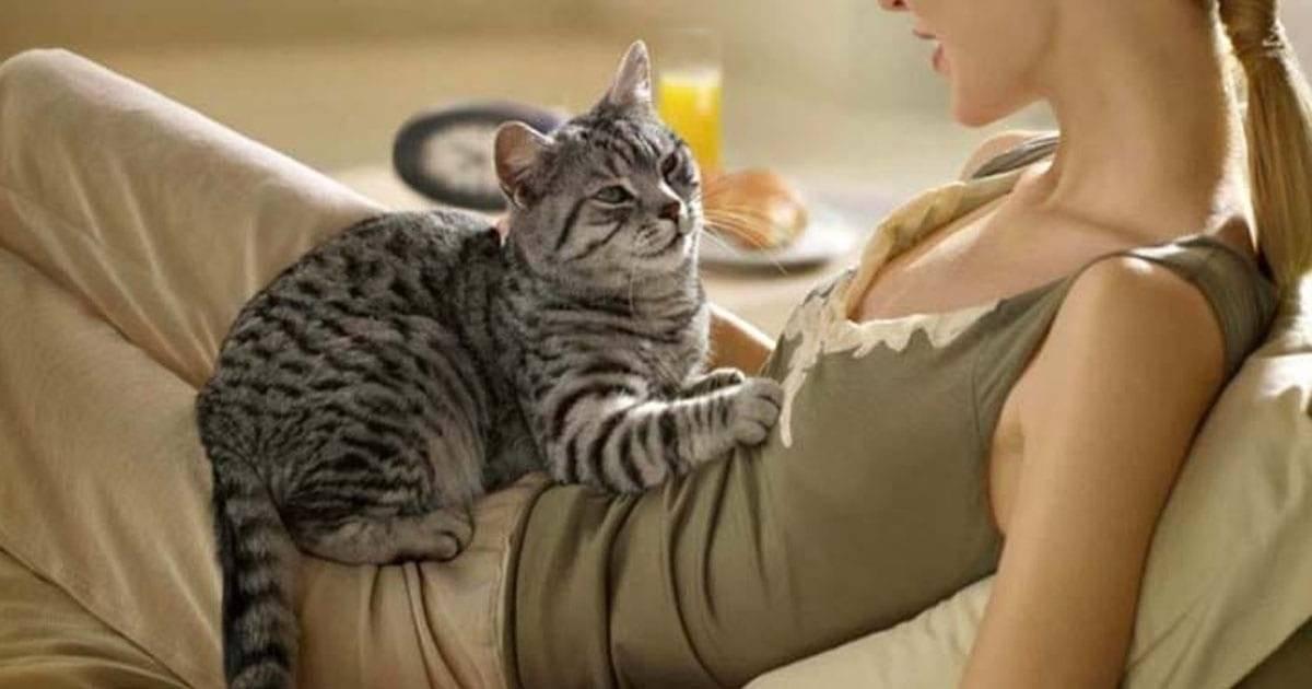 Почему коты делают лапками массаж человеку: что это может значить