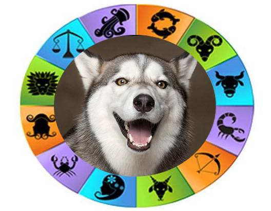 Знак собаки по восточному гороскопу – характер и особенности