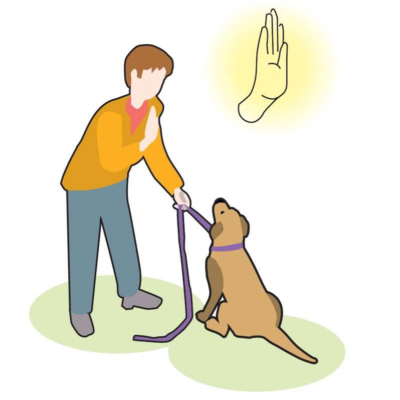 Лучшие методы обучения «сидеть» команде сидеть в домашних условиях. как научить собаку команде «сидеть»