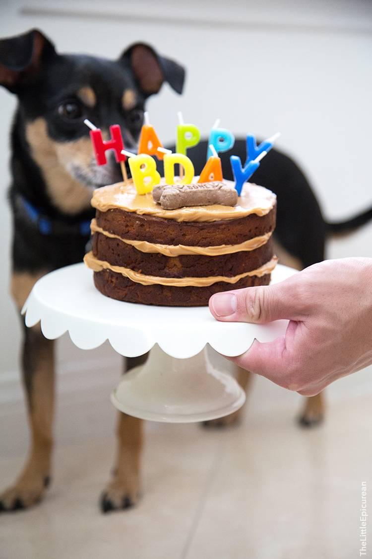 Радуем своего питомца: торт для собаки - то, что нужно четвероногому другу
