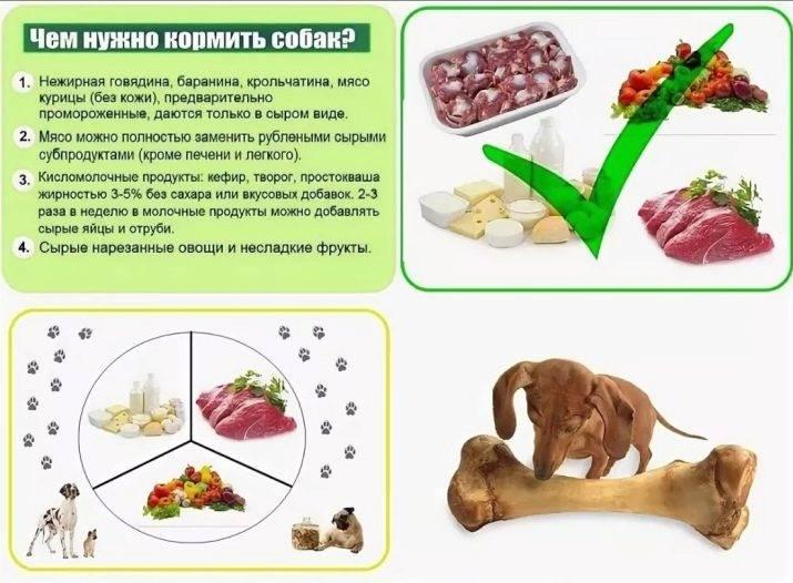 Куриные кости в рационе собаки: за и против