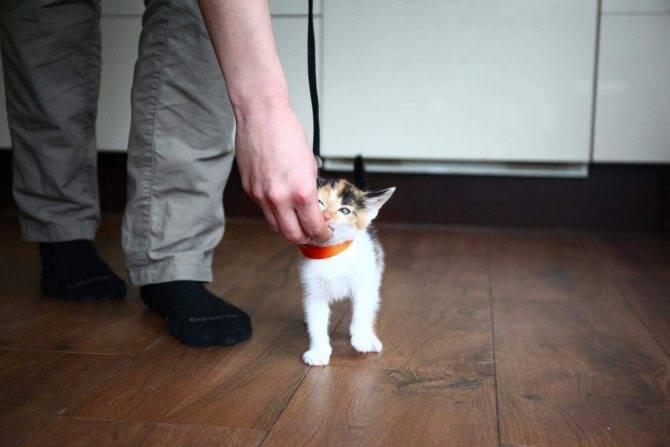 Как поймать кота