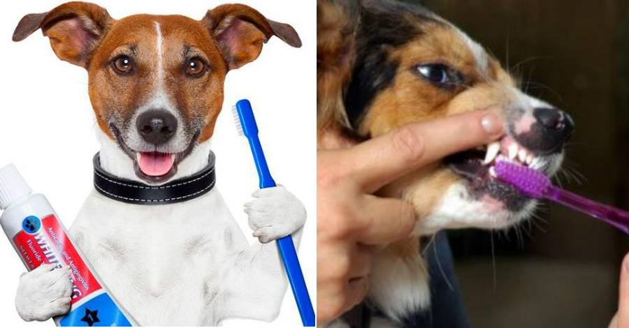 Как чистить зубы собаке: обзор щёток и специальных паст
