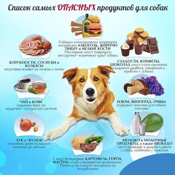 Почему нельзя кормить собаку со стола