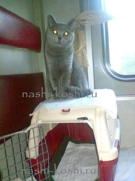 Правила провоза животных в поездах дальнего следования: создание условий