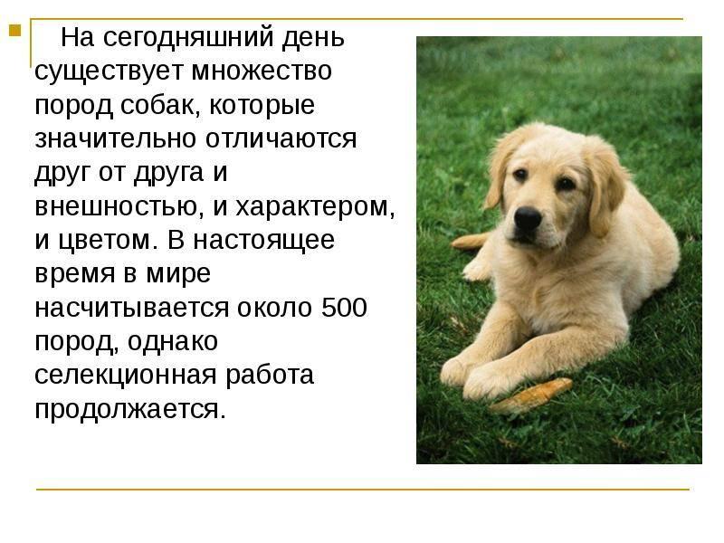 Разнообразие пород собак: названия, фотографии, советы