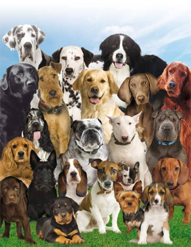 Обзор новых пород собак