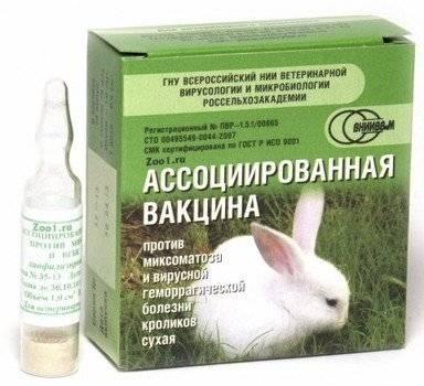 Вгбк-2 опасность номер один распространяется всё шире. | кролики. разведение и содержание в домашних условиях