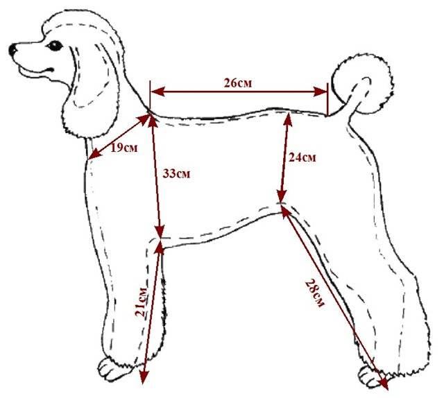Размеры одежды для собак — как правильно определить