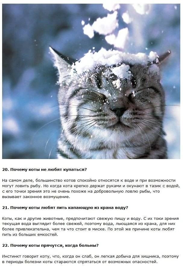 Интересные факты о кошках: исторические, научные
