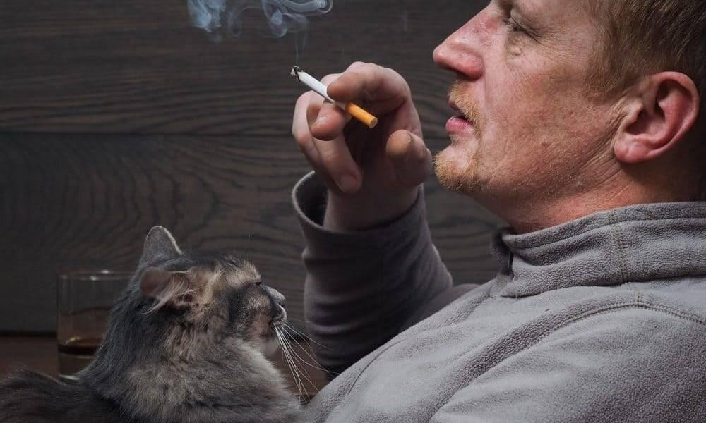 5 вредных привычек сокращающих жизнь кошек и собак