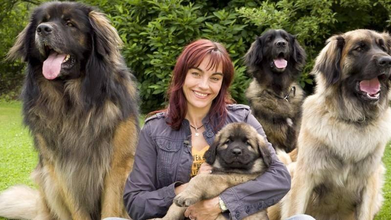 Все породы собак. название, описание каждой породы, фото, видео